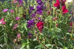 bloemen-kleur