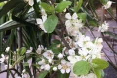 Bloesem-fruit-2-e1501768329617